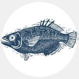 Vector drawn freshwater fish silhouette, natural graphic symbol. Royalty Free Stock Images