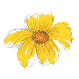 Vector drawn and painted flower. Vector drawn and painted yellow flower. Element isolated Stock Photo