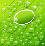 Vector drops of dew on a green background. The Vector drops of dew on a green background Royalty Free Stock Photography