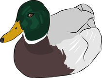 Vector duck Royalty Free Stock Photos
