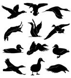 Vector ducks. 12 black silhouettes of ducks isolated on white background, vector Stock Photography