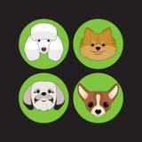 Vector e icono determinados del caniche del perro y del perrito Imagenes de archivo
