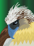 Vector Eagle. A  illustration of an sharp eyed eagle Royalty Free Stock Photo