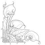 Vector Eckblumenstrauß von Entwurf Callalilie Blume oder Zantedeschia, die Knospe und aufwändiges Blatt im Schwarzen lokalisiert  stock abbildung