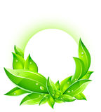 Vector Eco Concept with Leafs Stock Image