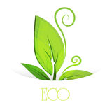 Vector eco leaves. Royalty Free Stock Photography