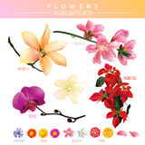 Vector Editable de la pendiente de las flores Imagenes de archivo