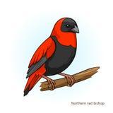 Vector educativo del juego del pájaro rojo septentrional del obispo Foto de archivo libre de regalías