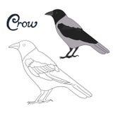 Vector educativo del pájaro del cuervo del libro de colorear del juego Fotografía de archivo