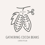 Vector Eenvoudig Logo Template Gathering Cocoa Beans royalty-vrije illustratie