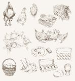 Vector egg chicken breeding set. Chicken breeding. set of vector sketches on a gray background royalty free illustration