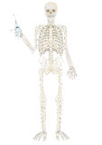 Vector ein Skelett der Person stock abbildung