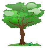 Vector el árbol Imagen de archivo libre de regalías