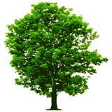 Vector el árbol stock de ilustración