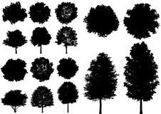 Vector el árbol de hoja caduca aislado en un fondo blanco Fotos de archivo libres de regalías
