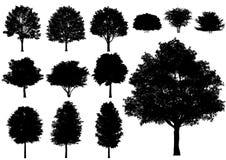 Vector el árbol de hoja caduca aislado en un fondo blanco Fotografía de archivo libre de regalías