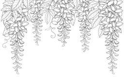 Vector el arco o túnel manojo de la flor de la glicinia o del Wistaria del esquema, brote y hoja en negro aislados en el fondo bl Imagen de archivo