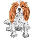 Vector el bosquejo del color del rey arrogante Charl del perro Fotografía de archivo
