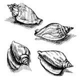 Vector el bosquejo inconsútil de las conchas marinas aisladas en el fondo blanco Imagen de archivo libre de regalías