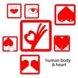 Vector el cuerpo humano y el corazón, concepto del icono rojo del amor Imagen de archivo