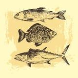 Vector el dibujo de bosquejo de los pescados - salmón, trucha, carpa, atún ejemplo dibujado mano del marisco Foto de archivo