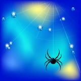 Vector el ejemplo con descensos de la araña, del web y del agua Foto de archivo libre de regalías