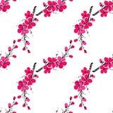 Vector el ejemplo con la rama de Sakura aislada en el fondo blanco Fondo del resorte Flor de cereza japonés Manzana floreciente l Imagen de archivo libre de regalías