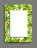 Vector el ejemplo con las aceitunas verdes y el aislamiento de la hoja en ilustración del vector