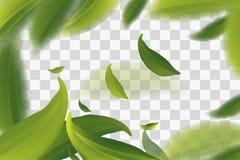 Vector el ejemplo 3d con las hojas de té verdes en el movimiento en un fondo transparente Elemento para el diseño, publicidad, em libre illustration