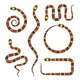 Vector el ejemplo 3d de Coral Snake o del Micrurus aislado en blanco Foto de archivo