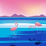 Vector el ejemplo de flamencos rosados en el lago en la puesta del sol, aislado Fotografía de archivo libre de regalías