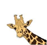 Vector el ejemplo de la cabeza de una jirafa Imagen de archivo libre de regalías