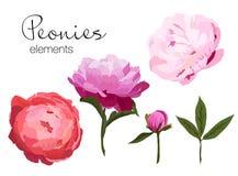 Vector el ejemplo de los elementos coloridos de las flores de las peonías en el fondo blanco Imagen de archivo