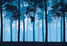 Vector el ejemplo de un bosque conífero con los árboles y la hierba stock de ilustración
