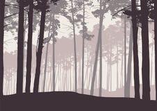 Vector el ejemplo de un bosque conífero del invierno con el árbol de pino libre illustration
