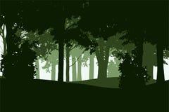 Vector el ejemplo de un bosque de hojas caducas y conífero libre illustration