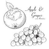 Vector el ejemplo de un bosquejo de la manzana y de las uvas Imagenes de archivo