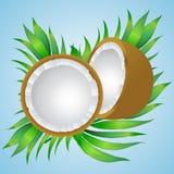 Vector el ejemplo de un coco con las ramas de la palma EPS10 stock de ilustración