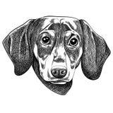 Vector el ejemplo de un perro basset para una tarjeta de Navidad Feliz Navidad en el año del perro ilustración del vector