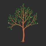 Vector el ejemplo del árbol de la primavera con el flor y las hojas Fotografía de archivo