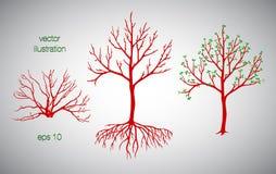 Vector el ejemplo del árbol y del arbusto rojos con las raíces y las hojas Imagen de archivo libre de regalías