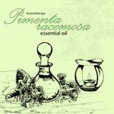 Vector el ejemplo del aceite esencial del racemosa de la Pimenta Fotografía de archivo libre de regalías