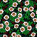 Vector el ejemplo del modelo colorido con las flores blancas en un fondo negro Imágenes de archivo libres de regalías