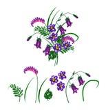 Vector el ejemplo del ramo hecho de wildflowers azules y violetas Foto de archivo libre de regalías