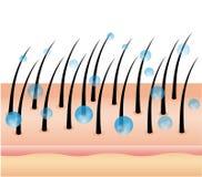 Vector el ejemplo del tratamiento del ingrediente activo profundamente en el pelo y el cuero cabelludo Suero del cuidado del cabe ilustración del vector