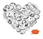 Vector el ejemplo nuts dibujado mano en forma del corazón Imagenes de archivo