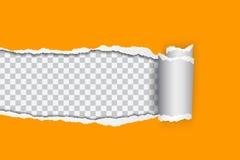Vector el ejemplo realista del papel rasgado anaranjado con e rodada ilustración del vector