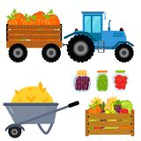 Vector el equipo de cosecha plano de los iconos de la cosecha para la agricultura y la horticultura, las frutas naturales sanas y Imagenes de archivo