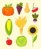 Vector el equipo de cosecha plano de los iconos de la cosecha para la agricultura y la horticultura, las frutas naturales sanas y Fotografía de archivo libre de regalías