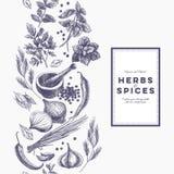 Vector el fondo con las hierbas y las especias dibujadas mano Imagen de archivo libre de regalías